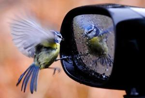 ave no espelho